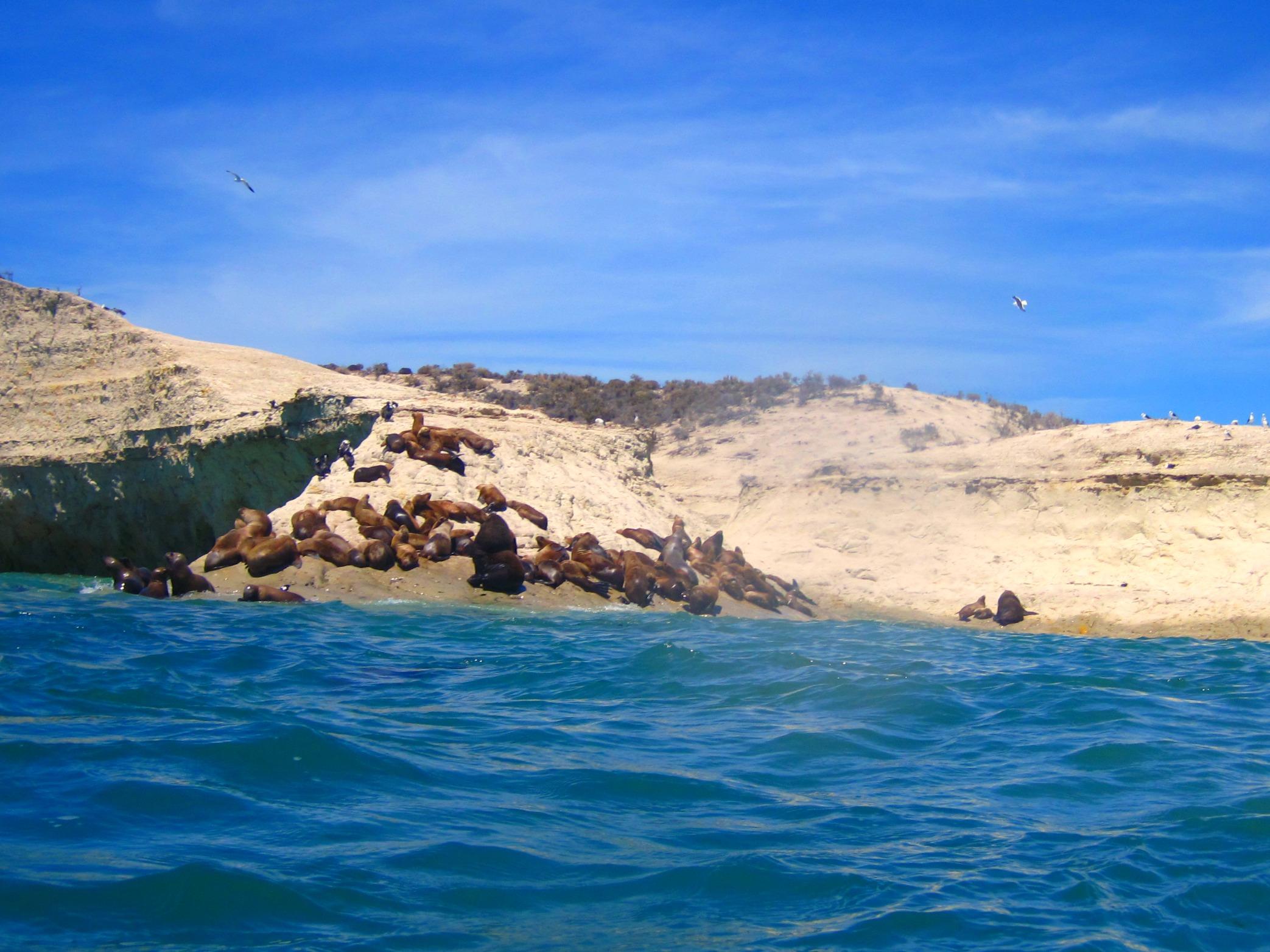 foto zeeleeuwen